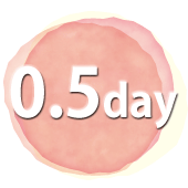 0.5day